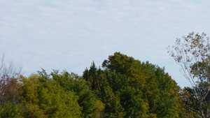Sherwood Forest CC: #9