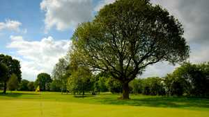 Langer tree at Fulford Golf Club