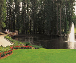 Value Golfer Package at Saddlebrook Resort